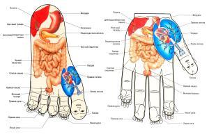 СуДжок терапия (Су-Джок) – это одно из направлений ОННУРИ медицины, разработанной южно-корейским профессором Пак Чже Ву. В переводе с корейского языка Су – кисть, Джок – стопа. Методика Су-Джок диагностики заключается в поиске на кисти и стопе в определенных зонах, являющихся отраженными рефлекторными проекциями внутренних органов, мышц, позвоночника болезненных точек соответствия (су-джок точки соответствия), указывающих на ту или иную патологию. Обладая большим количеством рецепторных полей, кисть и стопа связанна с различными частями человеческого тела. При возникновении болезненного процесса в органах тела, на кистях и стопах возникают болезненные точки «соответствия» - связанные с этими органами.