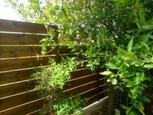Обычный деревянный забор