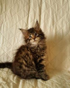 Айс - котенку 1 месяц 3 недели