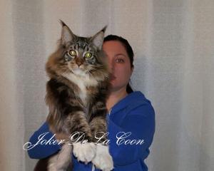 Джокер-На фото котенку 7 месяцев