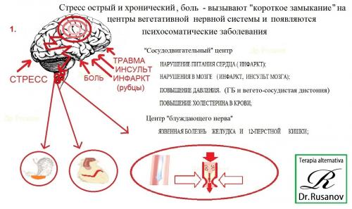 диетологи доктор борменталь