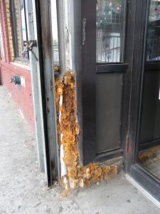 Нью-Йорк, район Южного Бруклина: на дверной коробке магазина виден обильный рост грибков. Важно: там. где растут грибки - там всегда должна идти речь о геопатогенных зонах...