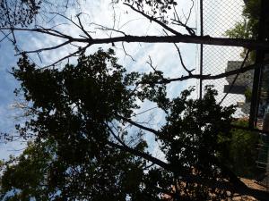 Ещё одна иллюстрация геопатогенных зон: два дерева - справа засохшее дерево, слева нормальное. Вот так и с людьми, живущими в зоне действия геопатогенного стресса... По данным литературы, около 20% людей живут на таких аномальных территориях. Ещё раз повторю: такие пациенты ГОДАМИ посещают не только врачей официальной медицины, но и гомеопатов,иглотерапевтов,травников(фитотерапевтов) и прочих представителей альтернативной медицины, но здоровье их продолжает ухудшаться. И не удивительно - НИКТО из вышеперечисленных специалистов не знаком с радиэстезией. Этому не учат в медицинских ВУЗах, да и не каждый способен этому обучиться - чтобы овладеть искусством радиэстезии, нужен дар, талант + колоссальная целеустремлённость, упорство  и настойчивость...