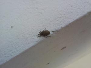 Уничтожение насекомых в Израиле.