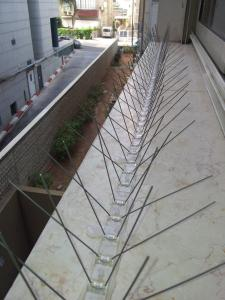 Установка шипов от голубей в Тель-Авиве.