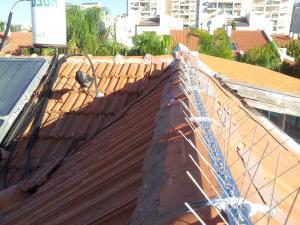 Комплексное решение по отпугиванию голубей. Шипы вместе с чучелом ворона на крыше.