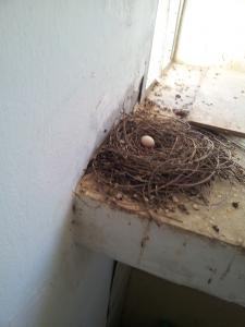 Голубиное гнездо на балконе? Опасно для здоровья!