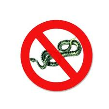 Змея в доме.