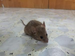 Действие яда от мышей