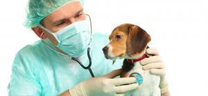 SOS! Когда нужно вызывать ветеринара?  При первых признаках недомогания обратитесь за помощью. Не надо ждать и надеяться, что питомец чудесным образом поправится. Никогда не давайте лекарства, не проконсультировавшись с врачом! Вы можете «стереть» симптомы заболевания. Тогда специалист поставит ошибочный диагноз, а ваш питомец будет болеть еще сильнее.  Симптомы, при которых срочно нужен ветеринар на дом:  — прерывистое дыхание, которое периодически замирает, потеря сознания; — сильное кровотечение, вы не можете его остановить; — рвота более 4-5 часов, без перерыва или понос; — жар, озноб, судороги; — живтоное отказывается от пищи несколько дней; — шерсть потеряла нормальный блеск, животное истощено; — носовое или ушное кровотечение (может свидетельствовать о переломе костей черепа); — красно-коричневая моча и кровянистый стул.  Помните, что многие болезни развиваются очень быстро. Поэтому если вы заметили, что ваш питомец отказывается от еды, слегка хромает, почти все время спит, то вам может понадобиться ветеринар на дом. При подозрении на перелом или внутренне кровотечение срочно вызывайте врача. Пока вы самостоятельно отвезете животное в клинику (например, с учетом пробок на дорогах) может быть уже поздно. тел. врача 053-7244354
