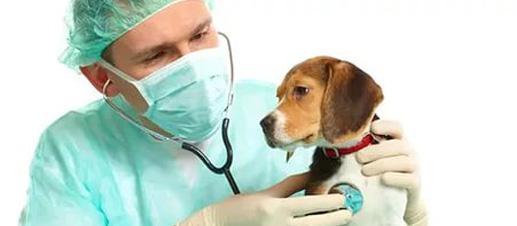 SOS! Когда нужно вызывать ветеринара?  При первых признаках недомогания обратитесь за помощью. Не надо ждать и надеяться, что питомец чудесным образом поправится. Никогда не давайте лекарства, не проконсультировавшись с врачом! Вы можете «стереть» симптомы заболевания. Тогда специалист поставит ошибочный диагноз, а ваш питомец будет болеть еще сильнее.
